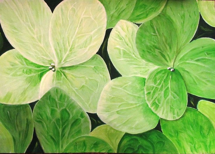 Картинки по запросу гортензия зеленая фото vfrhj