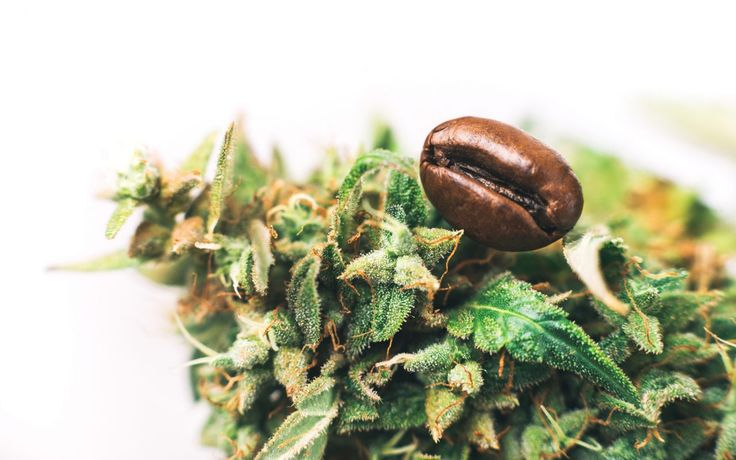 The Leafly Cannabis and Coffee Pairing Guide
