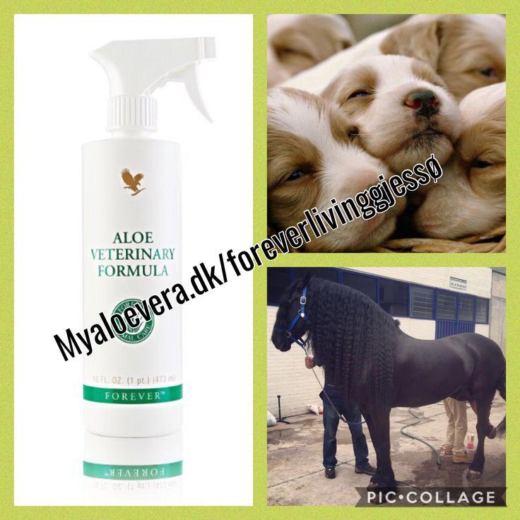 Hvad vil du forkæle dit kæledyr med?  Med Aloe Veterinary Formula, kan du give dit dyr en god pleje. Denne formel giver næring til tør hud, pels, poter, patter, hove, man og hale. Produktet kan også anvendes ved forbinding af ømme hudområder. Allantoin er en anden ingrediens; det er et stof, som plejer huden. Aloe Veterinary Formula fås i sprayflaske med praktisk forstøverpistol, som gør det nemmere at bruge.