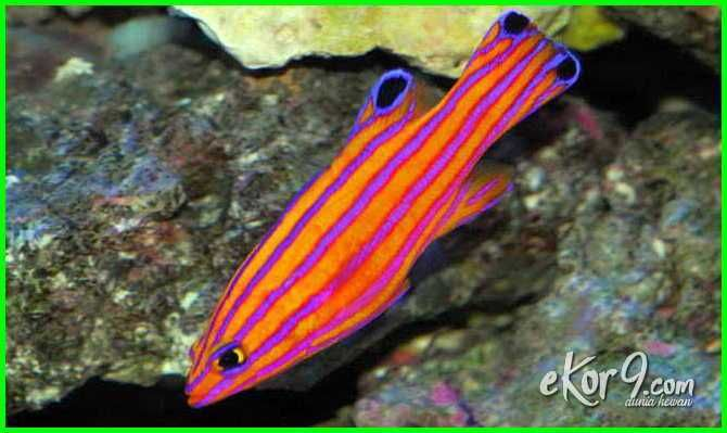Pin Di Ikan