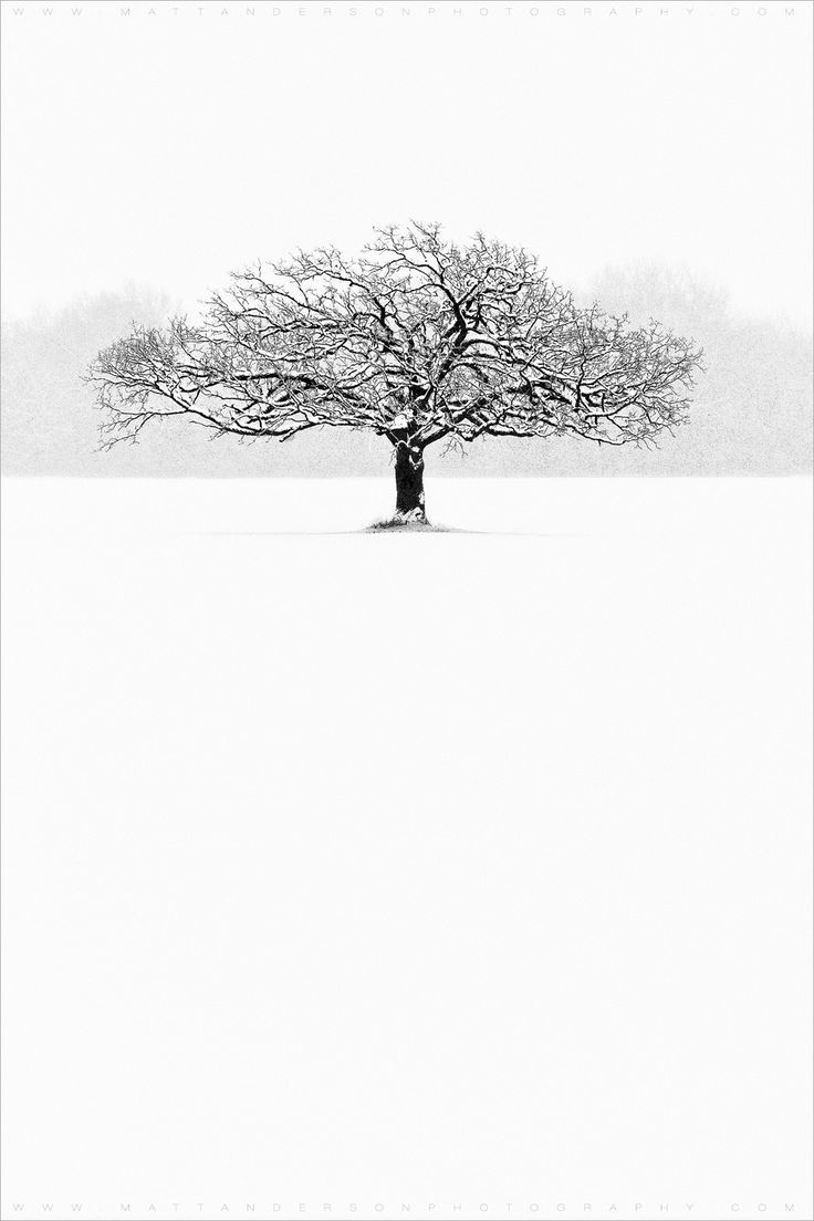 ~~Winter Tree (So Alone |  snow storm - blizzard in rural Wisconsin. A lone tree standing it's ground in the through the Winter storm, mono landscape | by Matt Anderson~~