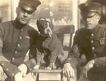 vintage boston terrier photo