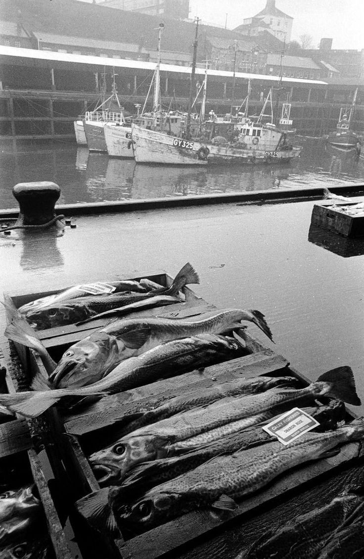 North Shields' famous Fish Quay and its story across 800 years