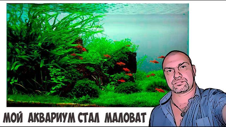 Мой аквариум много улиток