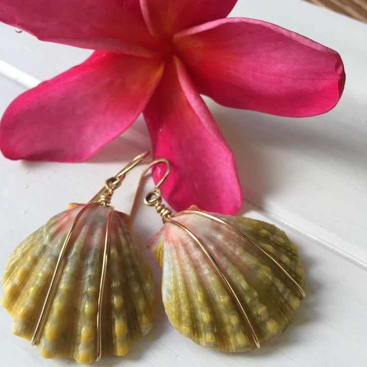 "Make her smile with these amazing sunrise shell earrings from Hawaii🌺 Big 1.5"" rare matching sunrise shell earrings are simply wrapped in 14k gold wire.  Beautiful just like her!❤"