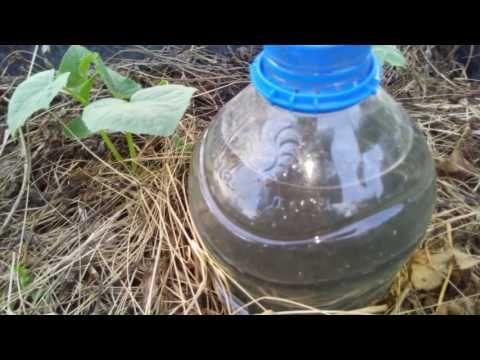 (75) Капельный полив бутылками -всё гениально и просто! - YouTube