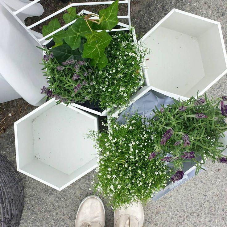 25 b sta id erna om spalj p pinterest pergola patio for Ikea barso trellis