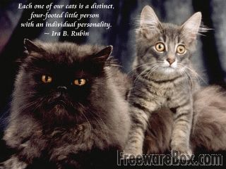 Cat Stock Quote 20 Best Quotes Relating To Cats Images On Pinterest  Cats Quotes .
