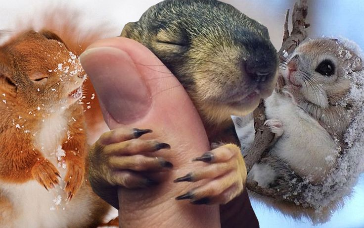 10 Pictures to Help You Celebrate Squirrel Appreciation Day