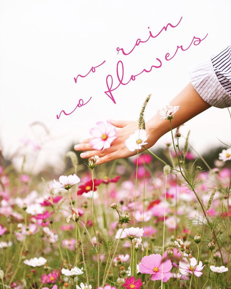 no rain, no flowers x