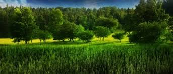 Resultado de imagen para paisajes verdes
