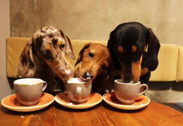 The World S First Sausage Dog Cafe Is Coming To The Uk Dog Cafe