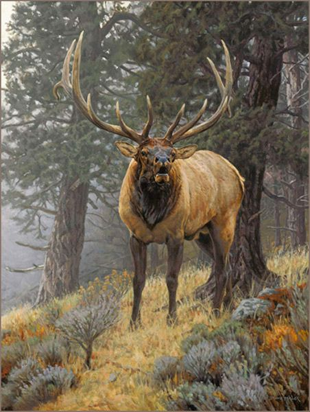 Bull elk oil painting by wildlife artist Bruce Miller