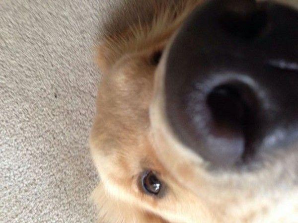 cane naso grande