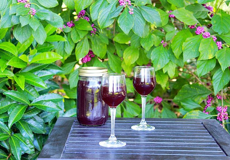 Blackberries in the Fall (recipe: Blackberry Cordial) | Syrup and ...