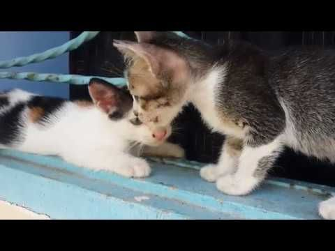 Two cute kitten playing around on a window. (Raw Version) https://youtu.be/_FQvevJOw6E
