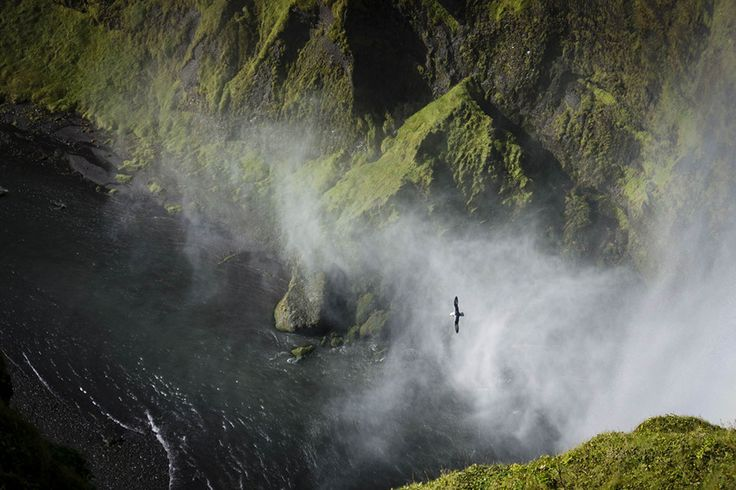Seagull soars through mist above moss covered ravine