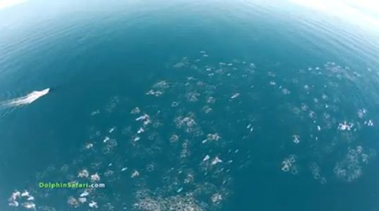 """This dolphin megapod stampede is some of the """"most beautiful and compelling"""" video ever captured. http://inhabitat.com/drone-captures-rare-footage-of-dolphin-megapod-stampeding-with-whales-video/"""