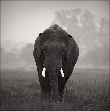 A #elephant in Jim Corbett National Park