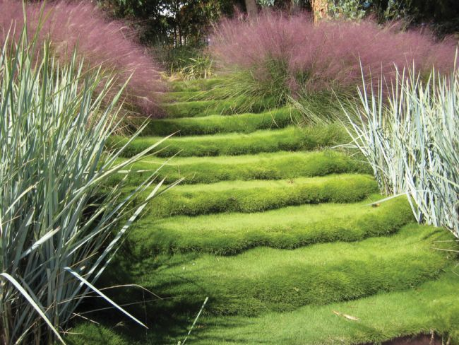 Best Planting Steep Banks Images On Pinterest Planting