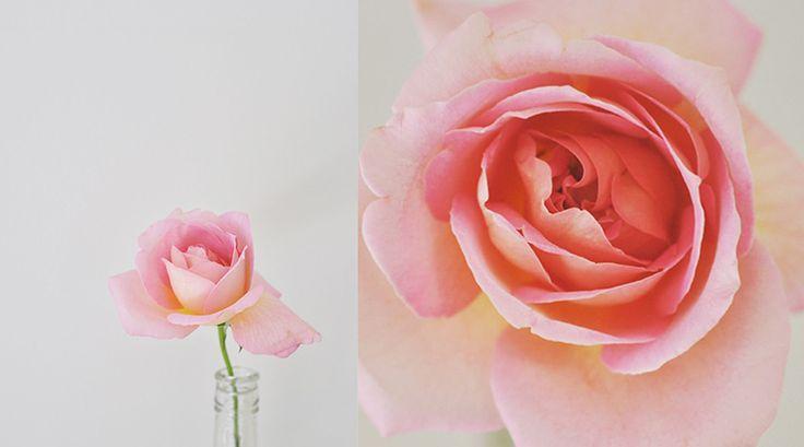 Home Scents © Donna Vercoe blog