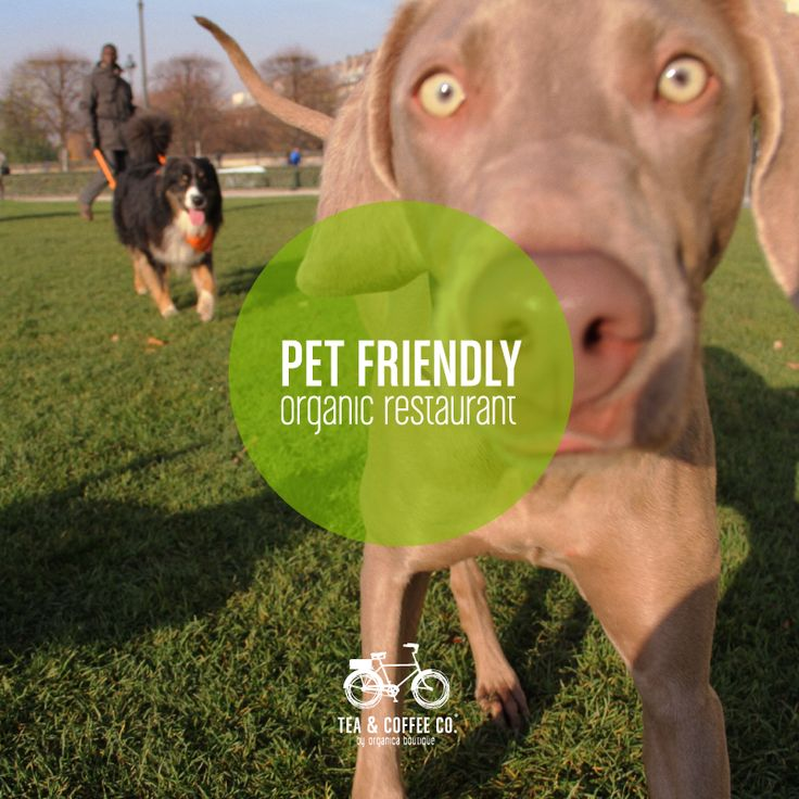 We are very Pet Friendly and we love it!!! Somos 100% Pet Friendly!!! http://www.teaandcoffeeco.com/