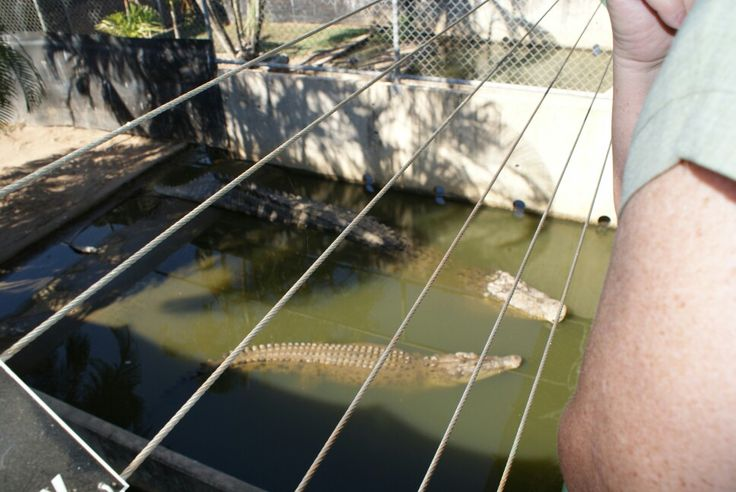Croc breeding pen