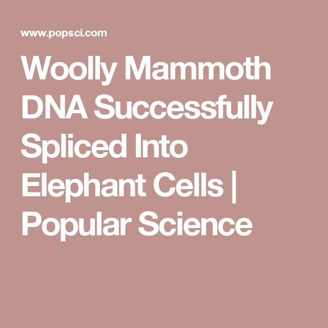 Woolly Mammoth DNA Successfully Spliced Into Elephant Cells   Popular Science