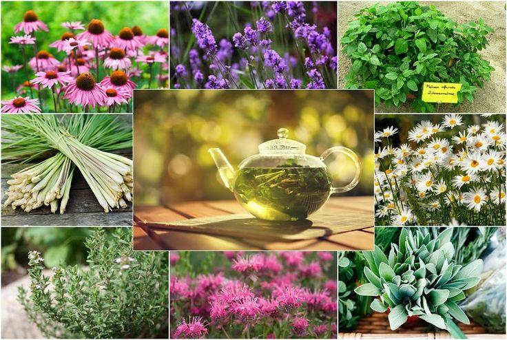 Bylinné čaje – zdravá alternativa domácích nápojů