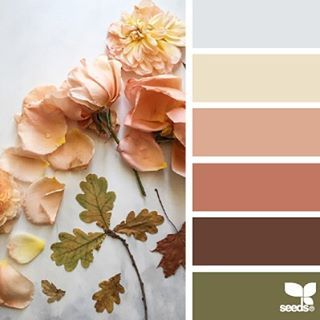 SnapWidget | today's inspiration image for { color nature } is by the talented @c_colli ... thank you, Cristina, for generously sharing your gorgeous images in #SeedsColor !