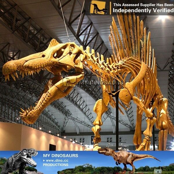 MY Dino-C052 Life size skeleton model of dinosaur spinosaurus