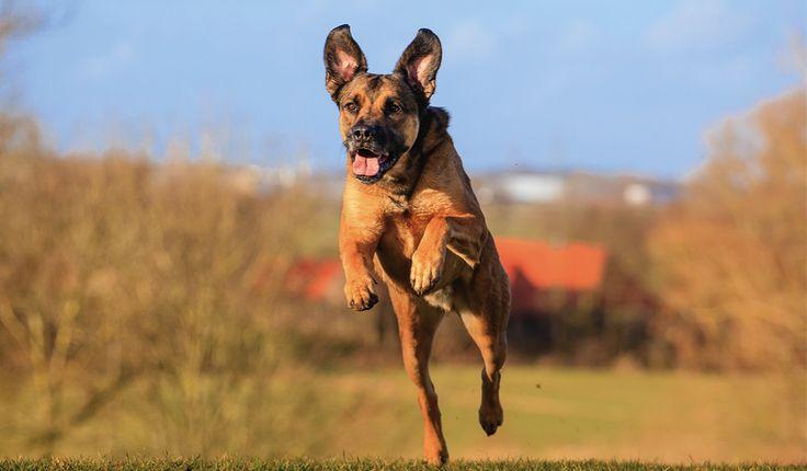 犬の栄養管理脂質犬の食事に必要な効率のよいエネルギー源