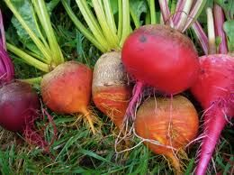 fall vegetable plants for sale online. fall vegetable gardening - google search plants for sale online