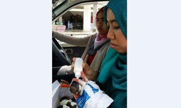 Gadis Melayu beri anak anjing minum susu jadi viral - http://malaysianreview.com/140728/gadis-melayu-beri-anak-anjing-minum-susu-jadi-viral/