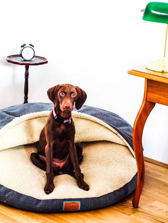 Das perfekte Hundebettchen: Der Snuggle Dreamer! Dank des einzigartigen Öffnungssystems kann der Hund einfach selbst hineinschlüpfen: Unser Erfahrungsbericht auf dem Blog