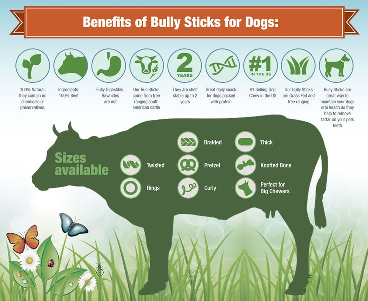best 25 bully sticks for dogs ideas on pinterest bully sticks bully meaning and dog health care. Black Bedroom Furniture Sets. Home Design Ideas