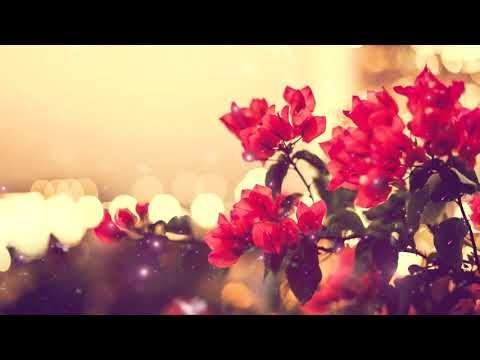 خلفيات فيديو للتصميم بدون كتابه بدون حقوق ومجانيه ورود حمراء مع رابط للجوال Dh 1080 P Vintage Flowers Wallpaper Floral Wallpaper Desktop Flower Wallpaper