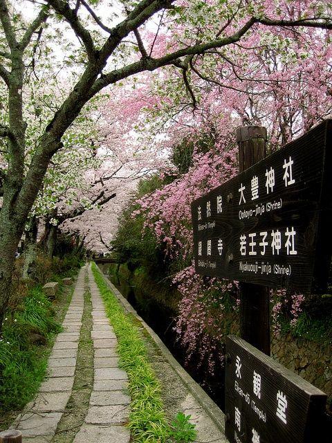 Kyoto, Le Chemin des philosophe : Ici en avril, pendant la période des cerisiers en fleur.