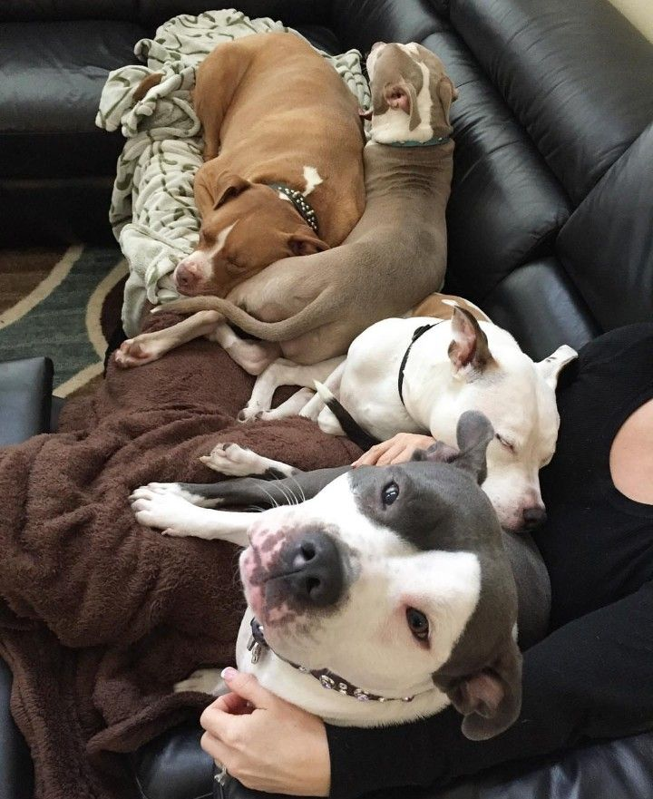 Ultimate cuddle pack