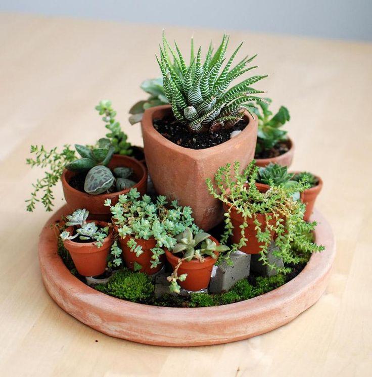 Maceta y macetitas  No Linde - Incremental Mini-Gardens #nolinde #moss #succulents #pots http://nolinde.com/garden/15