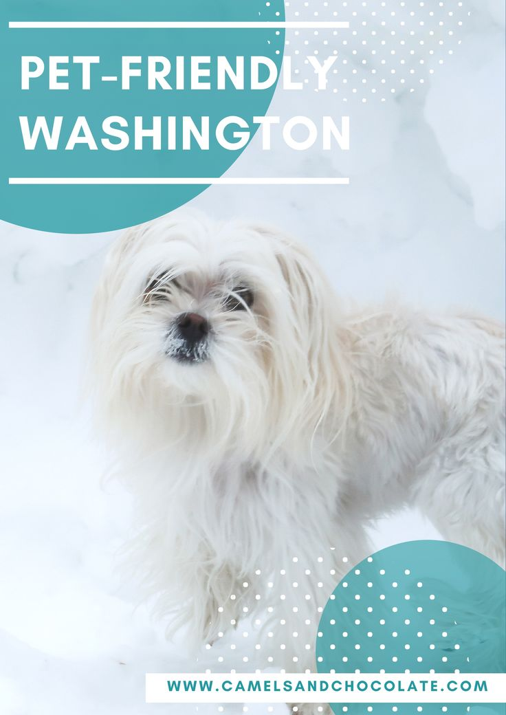 Washington with Pets: A Dog-Friendly Guide to Methow Valley in Washington State during Winter.  Click through to find out how to have an amazing winter break in Washington State with your furry friend.   Camels and Chocolate #washington #wintertravel #petfriendly #dogtravel