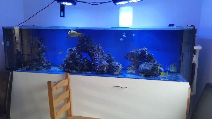 "Large Marine Fish Tank 7ft 7"" long with sump   eBay"
