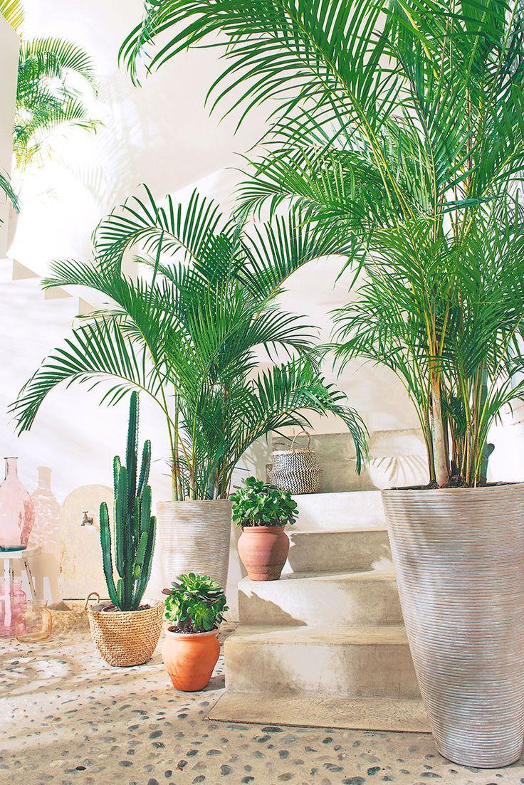 132 best images about truffaut plantes d 39 int rieur on for Plante palmier