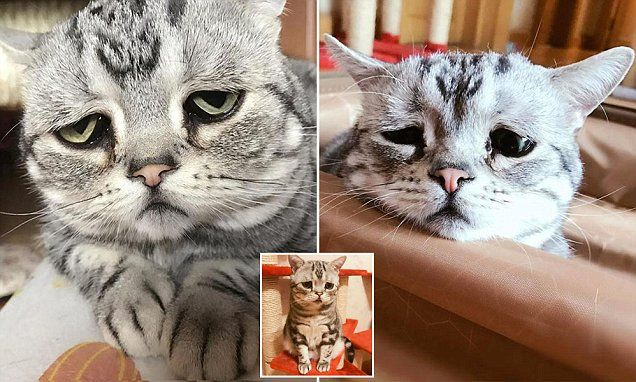 Is this the saddest cat on the internet?