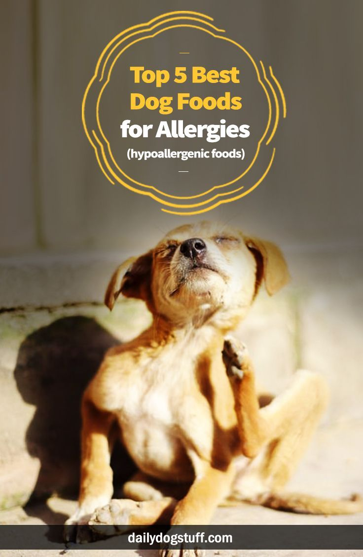 Top 5 Best Dog Foods For Allergies Hypoallergenic Foods Best