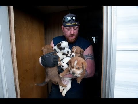 animal rescue