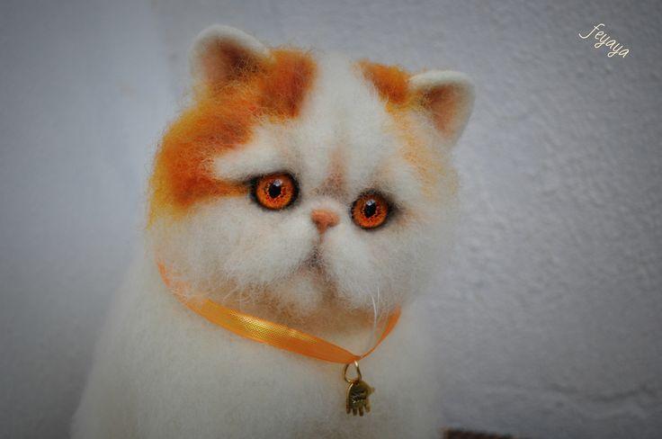 Няшный кот экзот.