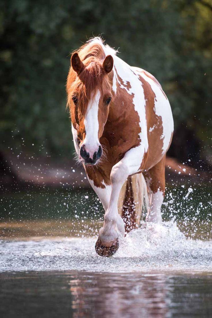 Info Claudia Rahlmeier Pferde Hintergrundbilder Haflinger Pferde Pferde Bilder