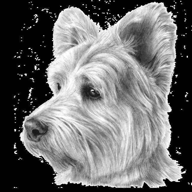 westies puppies pa | Westie Puppies For Sale In Pittsburgh Pa