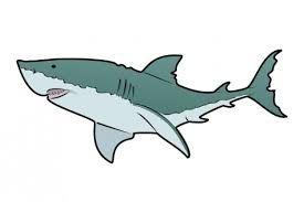 Image result for shark profile
